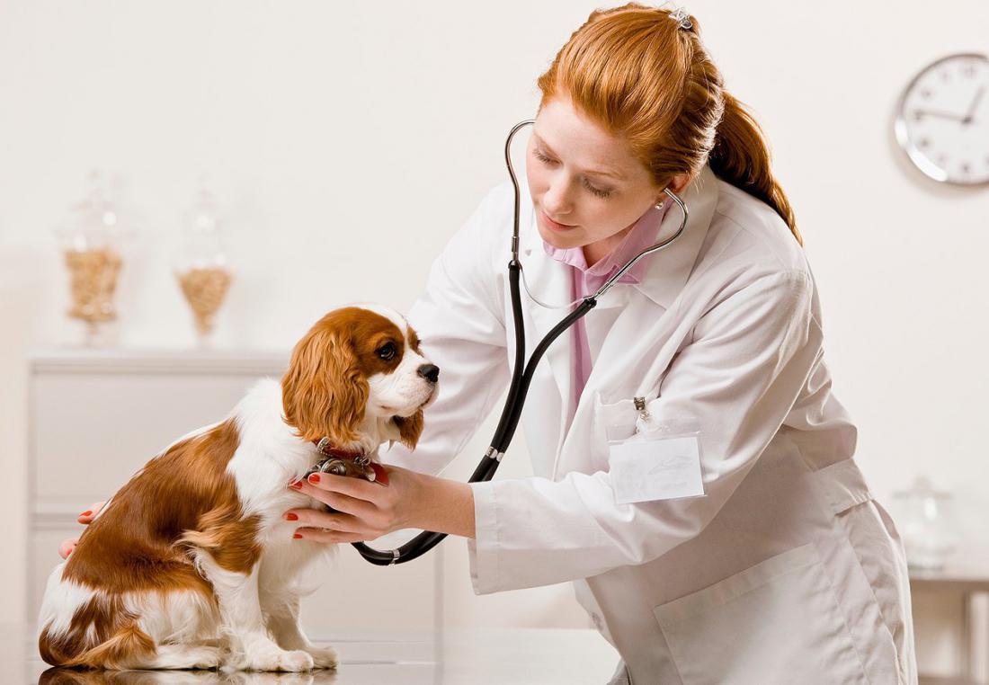 Оказывать ветеринарные услуги